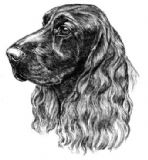 Field Spaniel Personalised Greetings Card